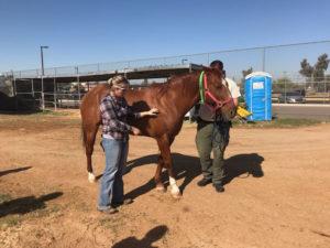 Maricopa County Sheriff's Office MASH Unit Equine Management Training- Arizona