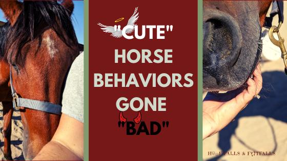 """Cute"" Horse Behaviors Gone ""Bad"""