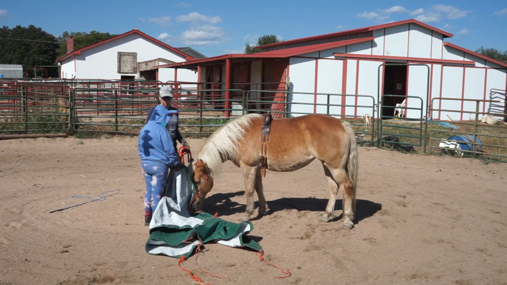 showing a horse a tarp
