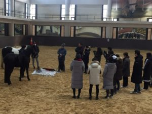 Instructor Training for Equine Programs for Fire/Police/Military- South Korea