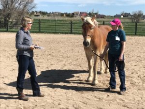 """Naughty Horse"" Presentation @ 2019 Regional Conference- Colorado"